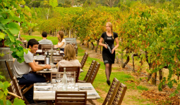 wine tourism